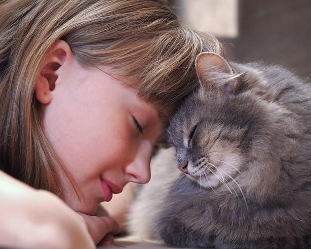 Humanos e gatos