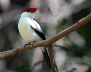 7 animais exóticos ameaçados de extinção no Brasil