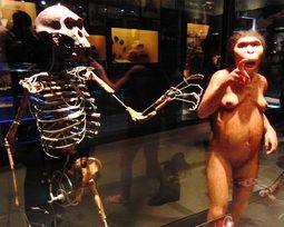 7 curiosidades sobre o fóssil da Lucy que você desconhece