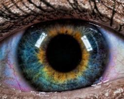 Pessoas de olhos violeta ou com duas cores diferentes? Veja essas e outras curiosidades sobre a cor dos olhos