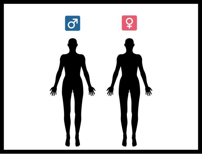 Anatomia_Homem e Mulher_Hipercultura