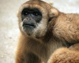 Animais em extinção no Brasil: por que estas 30 espécies podem desaparecer?