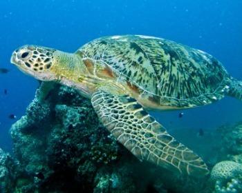 20 animais em extinção no mundo e por que o homem é responsável por isso