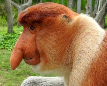28 animais mais estranhos e feios do mundo