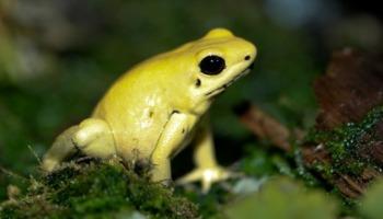Dos 12 animais mais venenosos do mundo, quem lidera a lista é um caracol