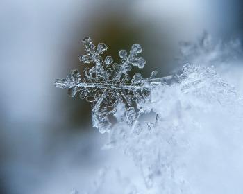 Você sabe o que são os flocos de neve? Aprenda tudo sobre esse fenômeno do inverno!