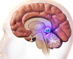 O que ciência nos diz sobre a glândula pineal?