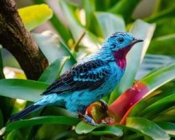 Essas serão as 15 mais belas e exóticas aves que você já viu