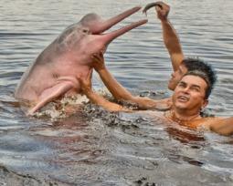 Boto-cor-de-rosa: o símbolo da Amazônia que é mais do que uma lenda
