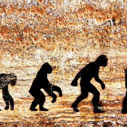 Conheça as fases da evolução do homem