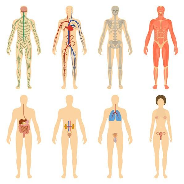 Corpo Humano_Hipercultura