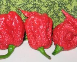 Cuidado: esta é a pimenta mais ardida do mundo!