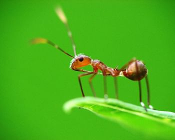 Formigas: 10 curiosidades incríveis sobre estes insetos