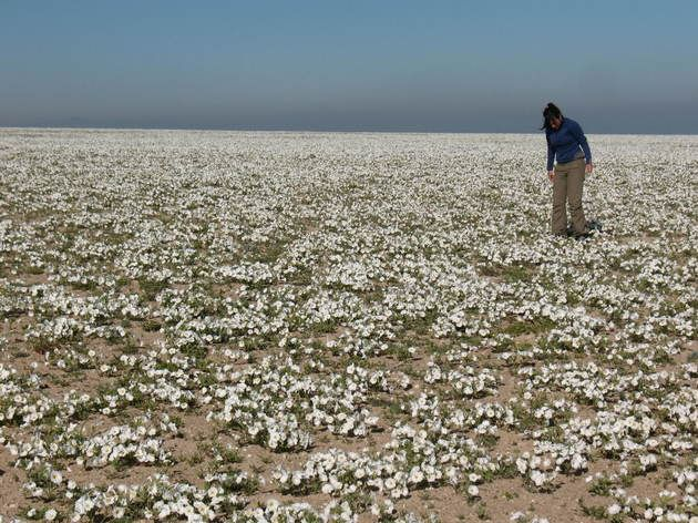 Deserto florido