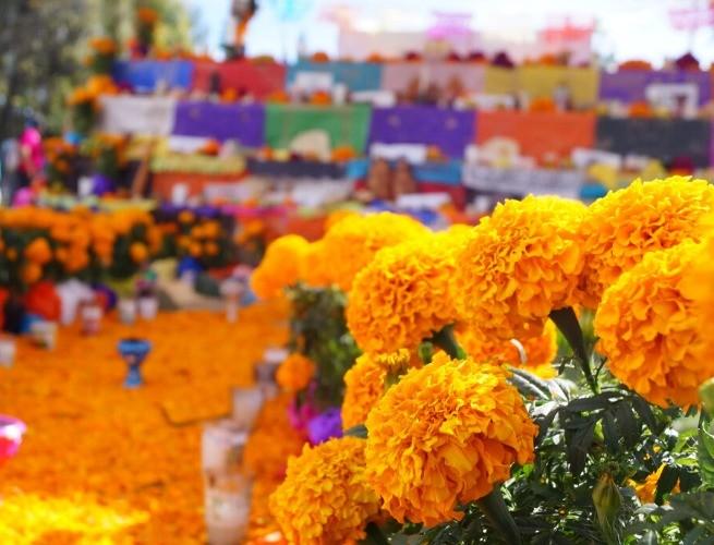 Cempasúchil pelas ruas do México