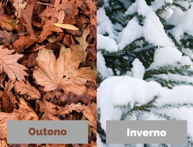Folhas outonais (outono) e folhas com neve (inverno)