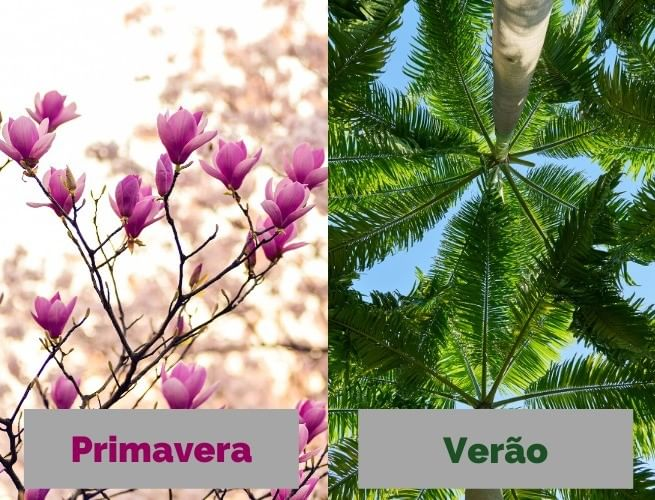 Flores rosas (primavera) e plantas verdes (verão)