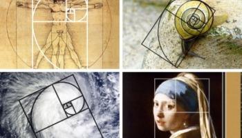 Sequência de Fibonacci: veja as suas aplicações na natureza e na arte
