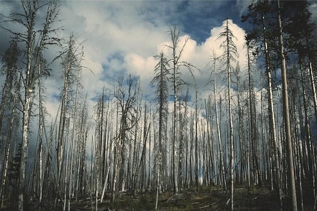 Chuva ácida em florestas