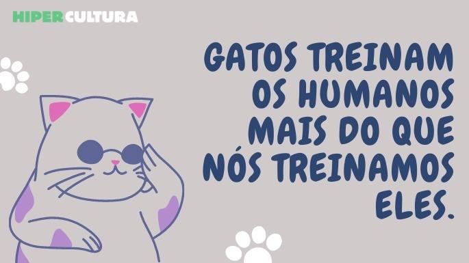 hipercultura-curiosidades-sobre-gatos-01