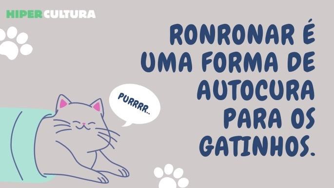 hipercultura-curiosidades-sobre-gatos-02