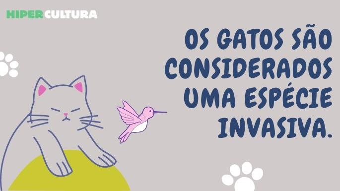 hipercultura-curiosidades-sobre-gatos-04