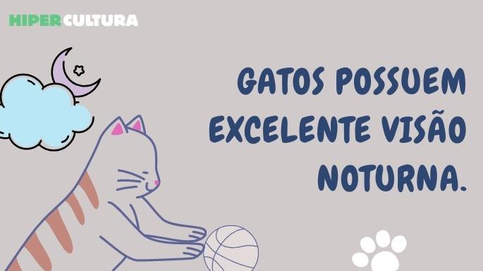 hipercultura-curiosidades-sobre-gatos-06