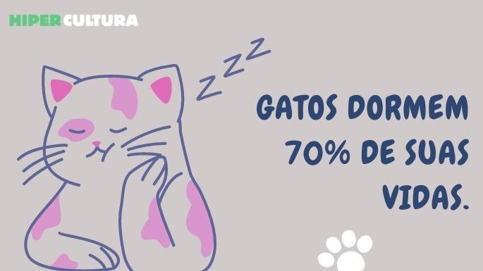 hipercultura-curiosidades-sobre-gatos-08