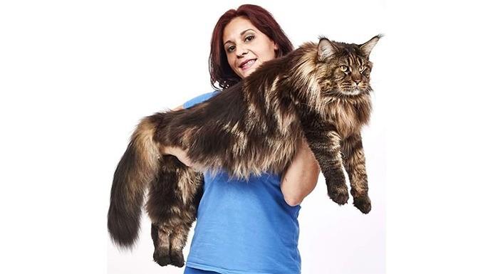 hipercultura-gatos-gigantes-06
