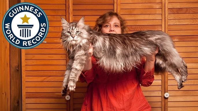 hipercultura-gatos-gigantes-07