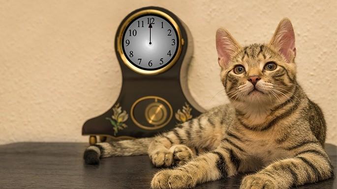 hipercultura-idade-dos-gatos-01