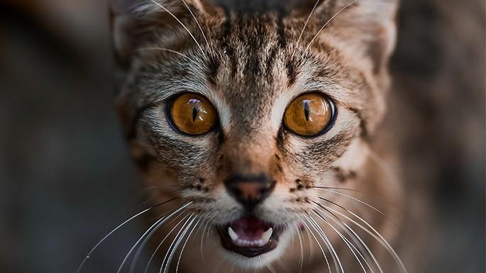 hipercultura-idade-dos-gatos-03