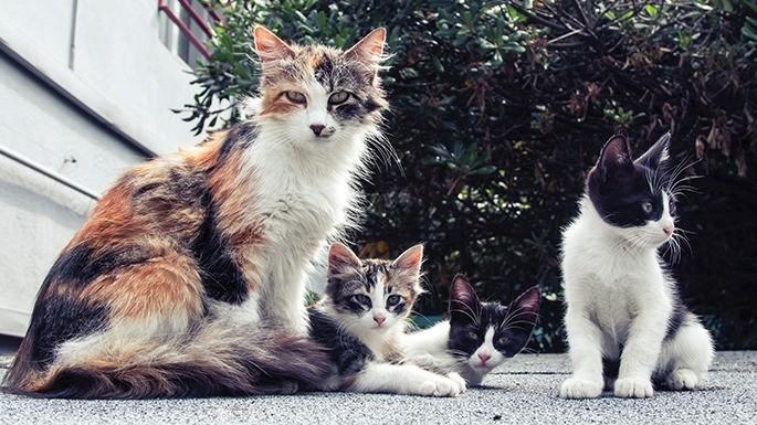 hipercultura-idade-dos-gatos-04