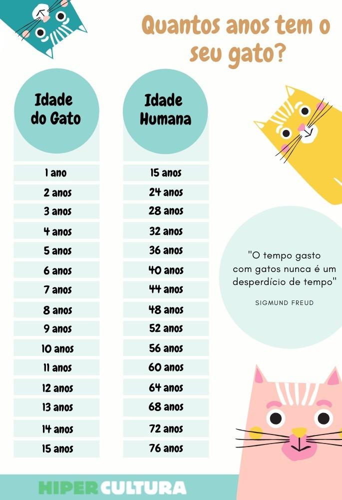 hipercultura-idade-dos-gatos-infografico