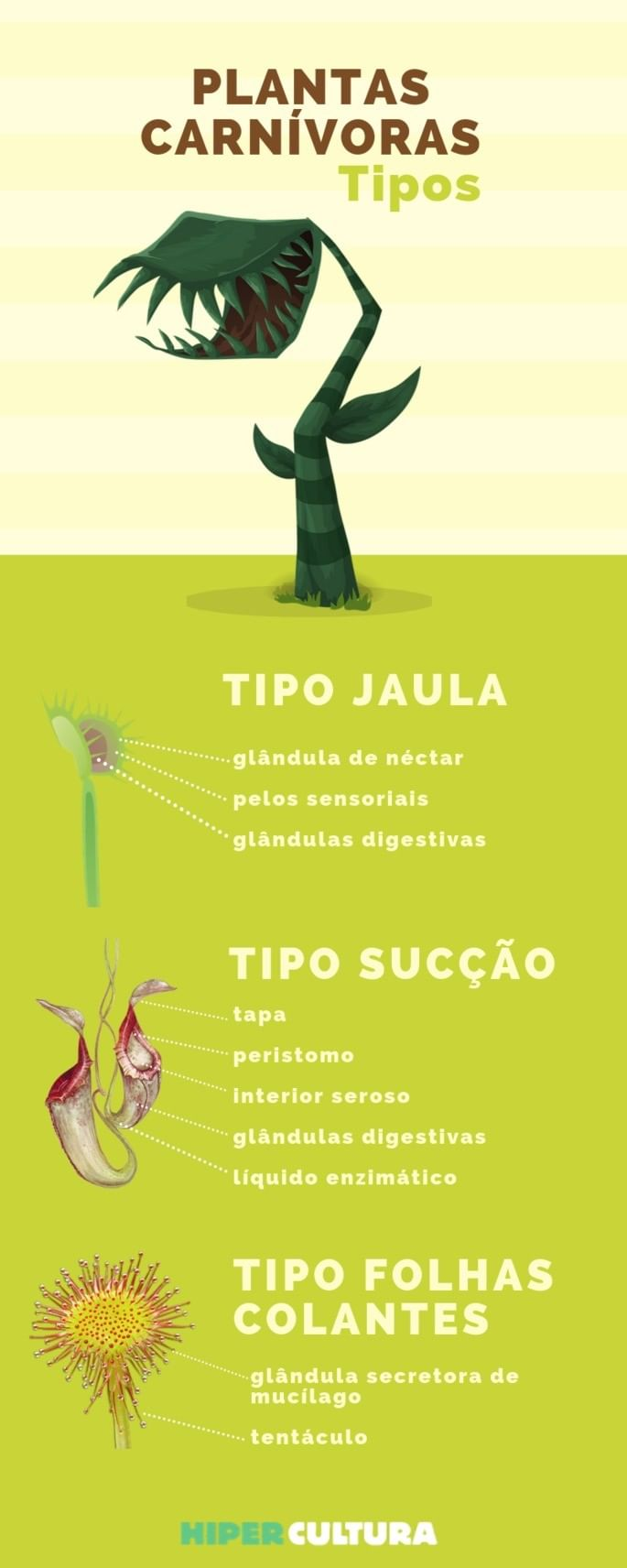 hipercultura-plantas-carnivoras-infografico