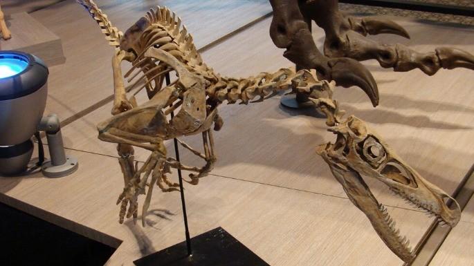 hipercultura-velociraptor-02