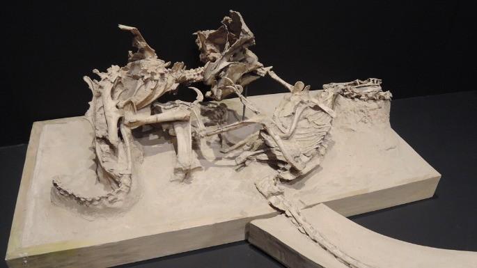 hipercultura-velociraptor-03