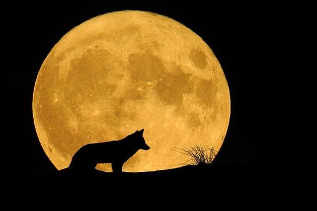 Lobo e lua