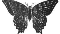 Efeito borboleta: o que é e como está presente em nossas vidas