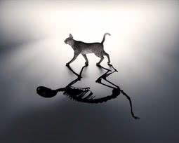 O gato na caixa: Entenda a teoria do gato de Schrödinger