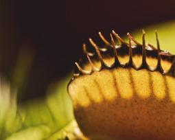 Plantas carnívoras: tipos, espécies e do que se alimentam