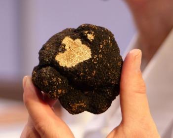 Por que a trufa (fungo) é um dos ingredientes mais caros do mundo?