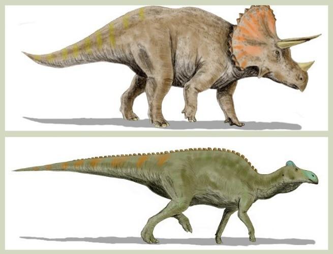 Tricerátops na imagem superior (© Nobu Tamura / Wikimedia Commons) e Edmontossauros na imagem inferior (© Nobu Tamura / Wikimedia Commons)