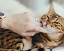 Qual é a idade dos gatos em relação aos humanos?