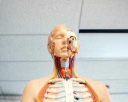 Quantos litros de sangue temos no corpo humano?