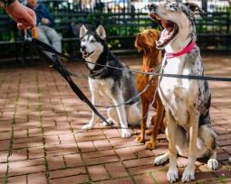 25 raças de cachorro populares para você conhecer melhor antes de escolher