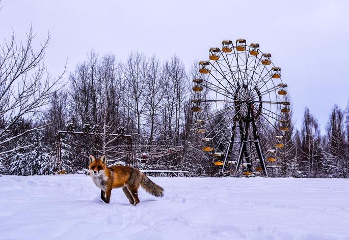 raposa Chernobyl