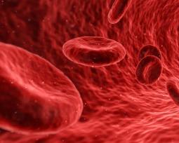 Sangue Dourado: Rh nulo é o sangue mais raro do mundo mas também pode ser o mais perigoso