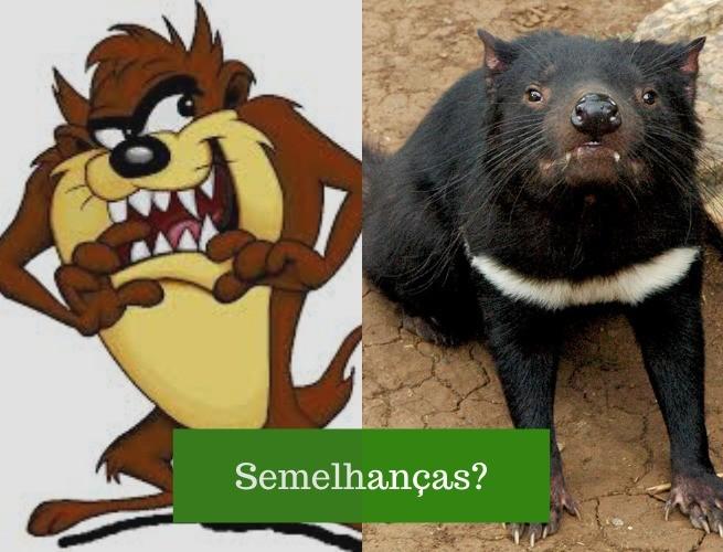 Comparação entre o Taz e o Diabo da tasmânia: há semelhanças?