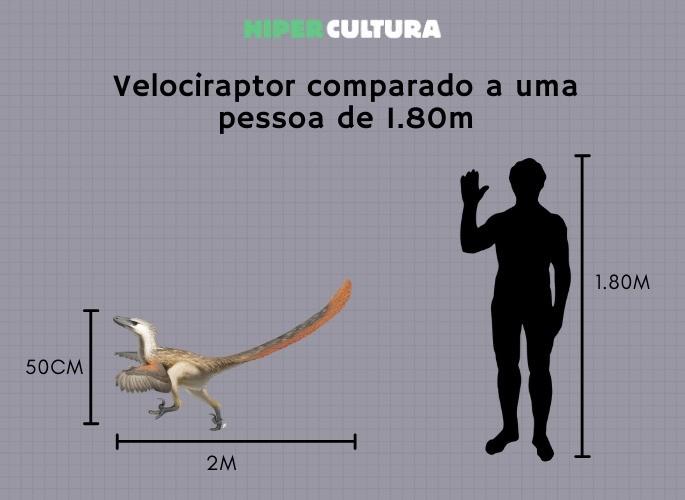 Velociraptor comparado a uma pessoa de 1.80m